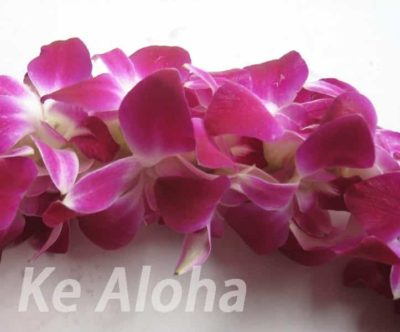 今日のハワイ語 基礎文法編 | ka/ke カ/ケ 英語のthe (定冠詞)